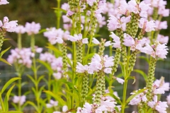 CBHF_PollinatorGarden_010819-11
