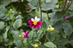 CBHF_PollinatorGarden_010819-115