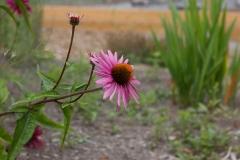 CBHF_PollinatorGarden_010819-24