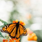 Pollinator-Friendly Garden